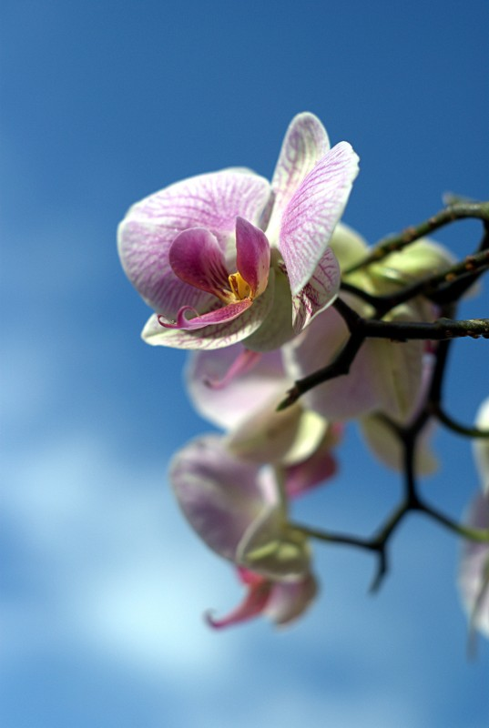 An orchid flower set against a blue sky